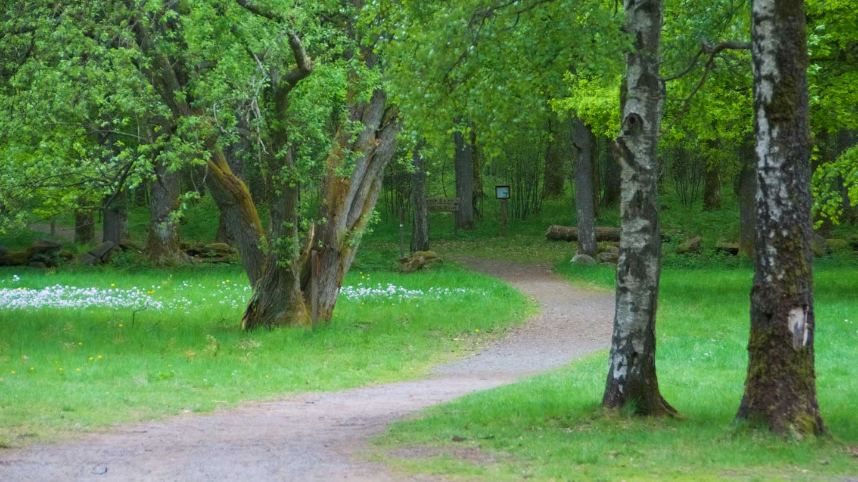 En slingrande skogsstig om våren